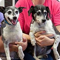 Adopt A Pet :: Thelma & Louise - Huntsville, AL