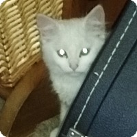 Adopt A Pet :: Nathan - Delmont, PA