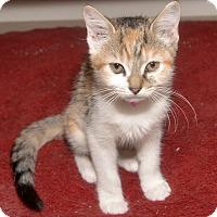 Adopt A Pet :: Krystal - Medina, OH
