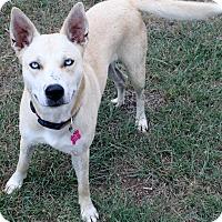 Adopt A Pet :: Tulip - Johnson City, TX