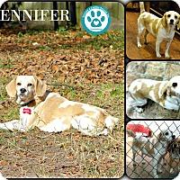 Adopt A Pet :: Jennifer - Kimberton, PA