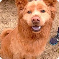 Adopt A Pet :: Thor - Fennville, MI