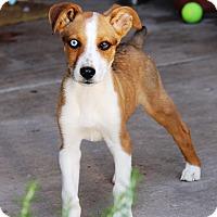Adopt A Pet :: Dorito - Phoenix, AZ