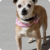 Adopt A Pet :: Tess - Las Vegas, NV