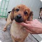 Adopt A Pet :: Charles - Adoption Pending