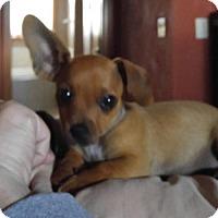 Adopt A Pet :: Taco - Grafton, WI