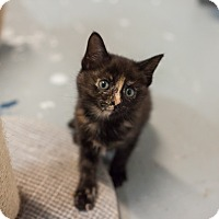 Adopt A Pet :: Marley - Statesville, NC