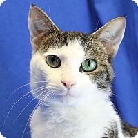 Adopt A Pet :: Lance - Winston-Salem, NC