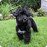 Adopt A Pet :: FARGO - Newport Beach, CA