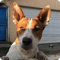 Adopt A Pet :: Forest - Santa Ana, CA