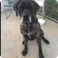 Adopt A Pet :: Athena - Beverly Hills, CA