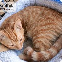 Adopt A Pet :: Kodiak - Temecula, CA