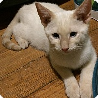 Adopt A Pet :: Marvin - Washington, DC