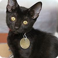 Adopt A Pet :: Mimi - Bradenton, FL