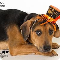Adopt A Pet :: Zack - Baton Rouge, LA