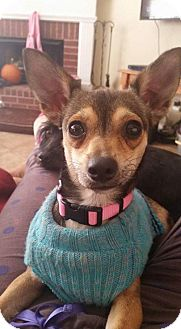 Chihuahua Mix Dog for adoption in DeRidder, Louisiana - Pebbles