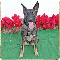 Adopt A Pet :: HERO - Marietta, GA