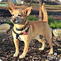 Adopt A Pet :: Terry - Yreka, CA