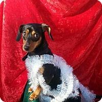 Adopt A Pet :: Karlee - Seaford, DE