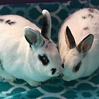 Adopt A Pet :: Ireland & Knox - Watauga, TX