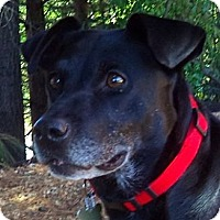 Adopt A Pet :: Margo - Roswell, GA