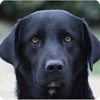 Adopt A Pet :: Bosco - kennebunkport, ME