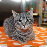 Adopt A Pet :: Roscoe - Farmingdale, NY