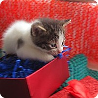Adopt A Pet :: Kittens - Orillia, ON