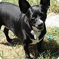 Adopt A Pet :: LISA - Fresno, CA
