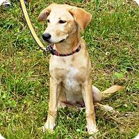 Adopt A Pet :: Yellar - Huntsville, AL