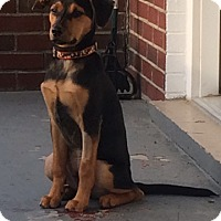 Adopt A Pet :: Rocky - Washington, PA