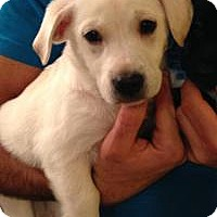 Adopt A Pet :: Gulia - Marlton, NJ