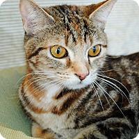 Adopt A Pet :: Ella - Palmdale, CA