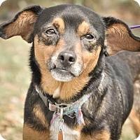 Adopt A Pet :: Manny - Gainesville, FL