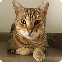 Adopt A Pet :: Warner - Chandler, AZ