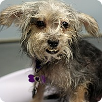 Adopt A Pet :: Rebecca - Mount Laurel, NJ
