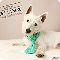 Adopt A Pet :: Liam-Pending Adoption - Omaha, NE