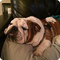 Adopt A Pet :: Timmy - Park Ridge, IL