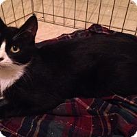 Adopt A Pet :: Moonpie - Monroe, GA