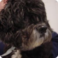 Adopt A Pet :: Dudley - Gainesville, FL