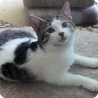 Adopt A Pet :: Micah - Mississauga, Ontario, ON