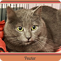 Adopt A Pet :: Pewter - New Richmond,, WI