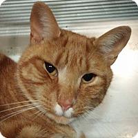 Adopt A Pet :: Cheddar - Trevose, PA