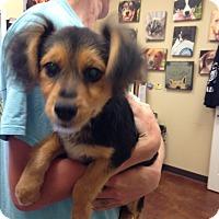 Adopt A Pet :: Wrigley - Groton, MA