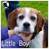 Adopt A Pet :: Little Boy - Chicago, IL