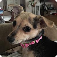 Adopt A Pet :: Mavis - Lodi, CA