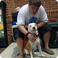 Adopt A Pet :: Justin - Columbia, MD