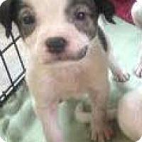 Adopt A Pet :: Freedom - Barnegat, NJ