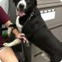 Adopt A Pet :: Kinnick - Ottumwa, IA