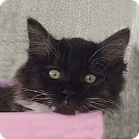 Adopt A Pet :: Mitzie - Tiburon, CA